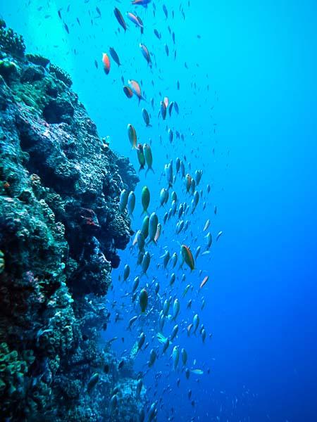 Noah Boat Maldives - diving and snorkelling